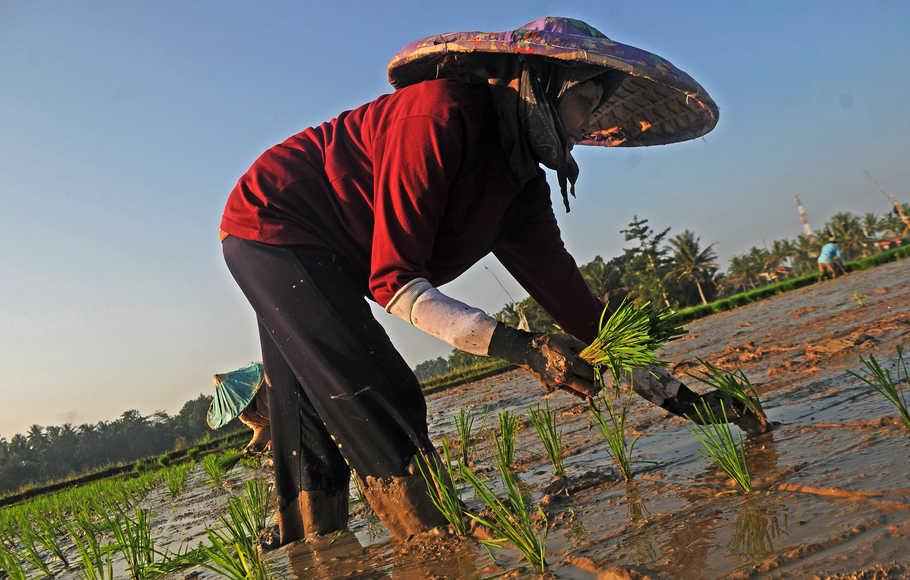 Petani menanam padi di Kampung Ciseke, Lebak, Banten, Kamis (9/5/2019).